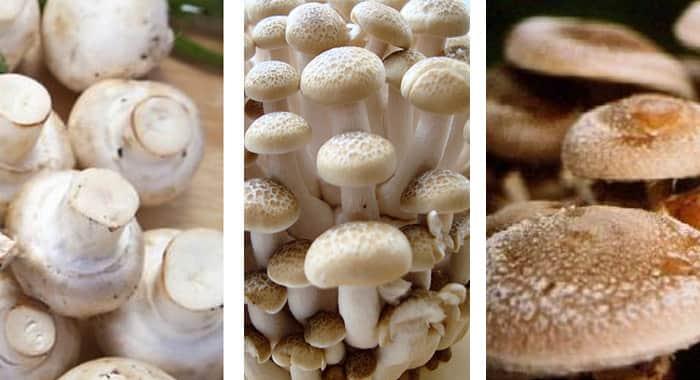 receita-ragu-de-cogumelos